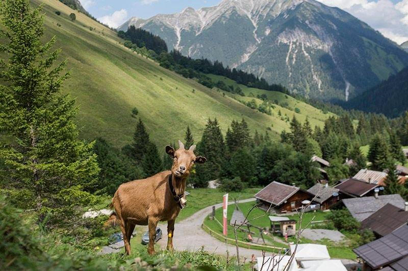 Das Land Tirol bietet Kulinarik auf höchstem Niveau