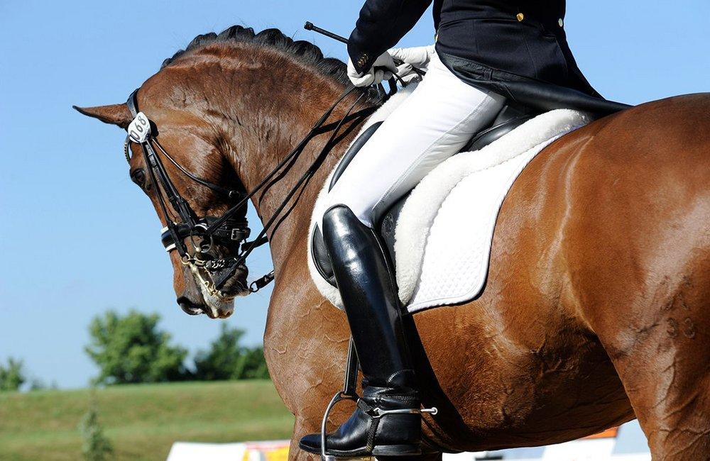 Symbolfoto Sportart Pferdesport